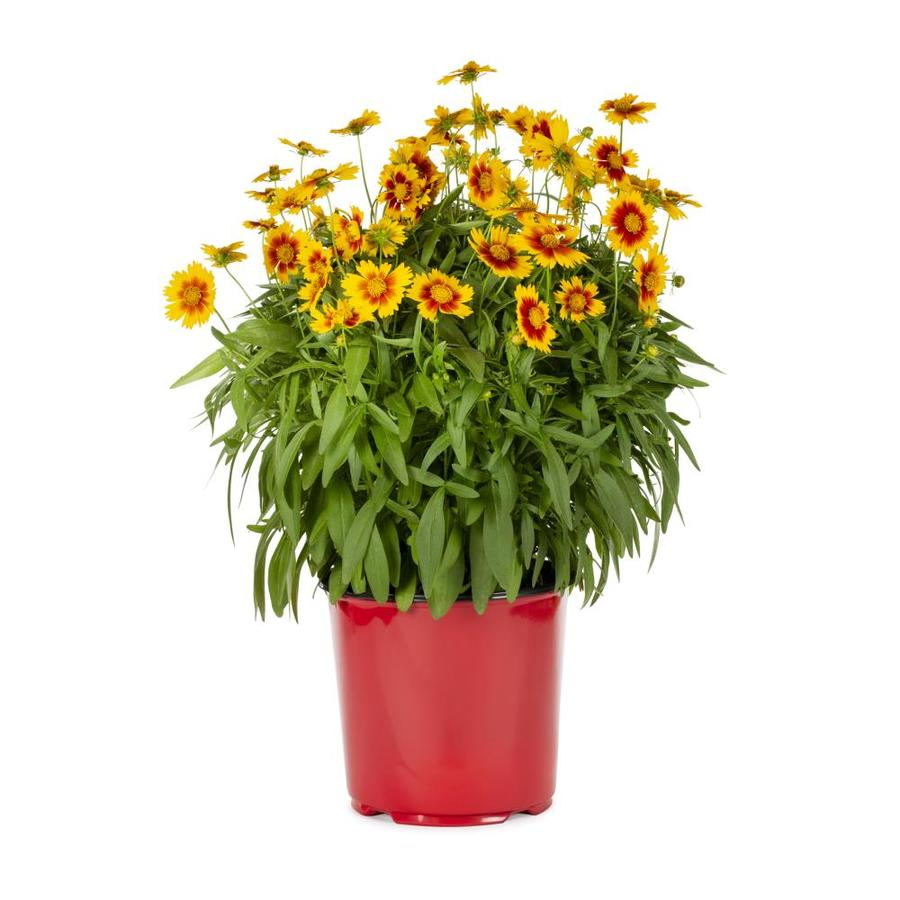 1.5-Gallon CoreoPSIs (L9636)
