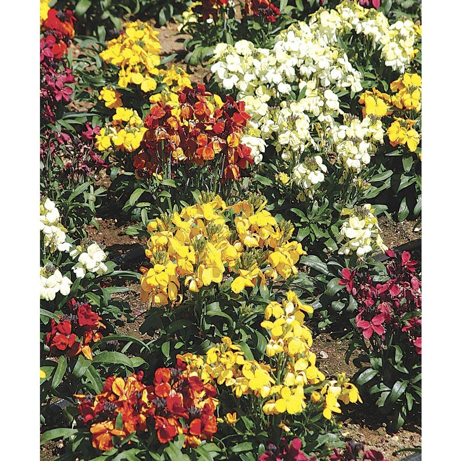 1.5-Gallon Wallflower (Lw04008)
