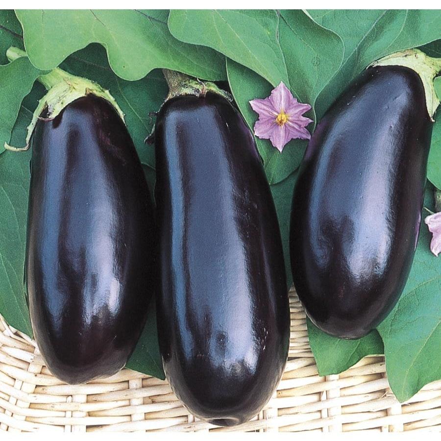 2.5-Gallon Eggplant Plant (L17271)