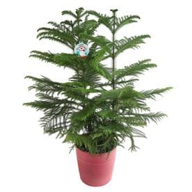 Shop House Plants at Lowes.com on restaurants in fresno, events in fresno, condos in fresno, farms in fresno, apartments in fresno, homes in fresno, employment in fresno, cars in fresno, housing in fresno, hotels in fresno, schools in fresno,