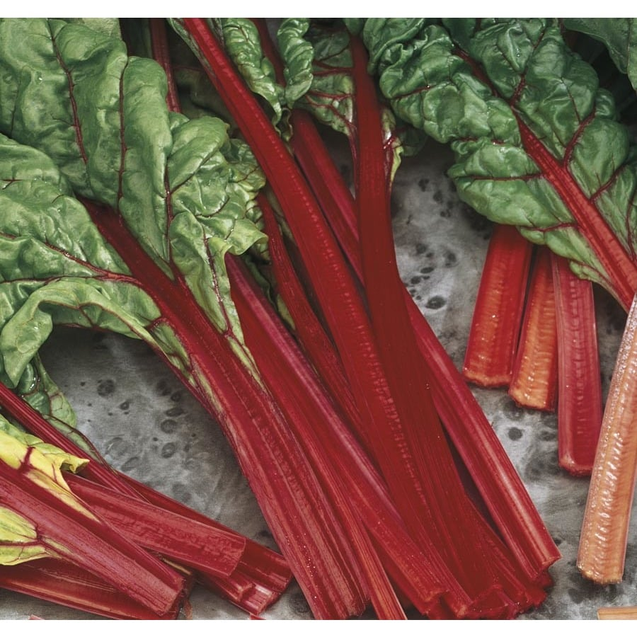 2.5-Quart Ornamental Swiss Chard (L22288)
