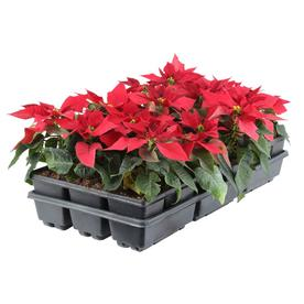 Shop Plants Bulbs Amp Seeds At Lowes Com