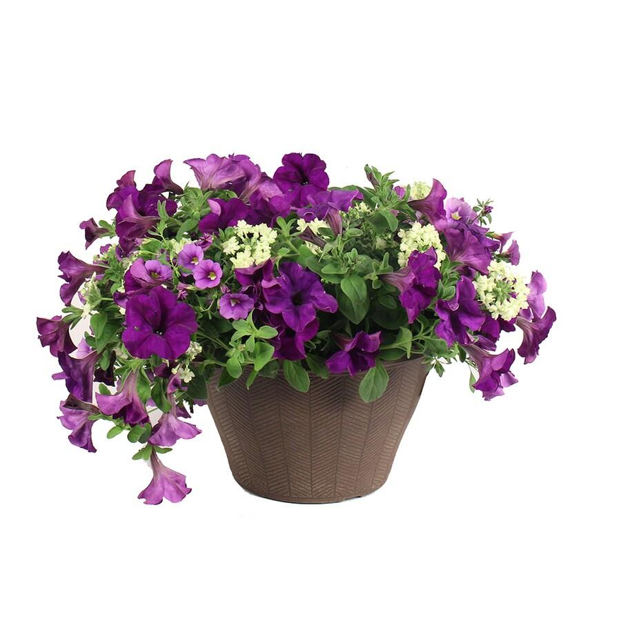 2-Gallon Planter Mixed Annuals Combinations