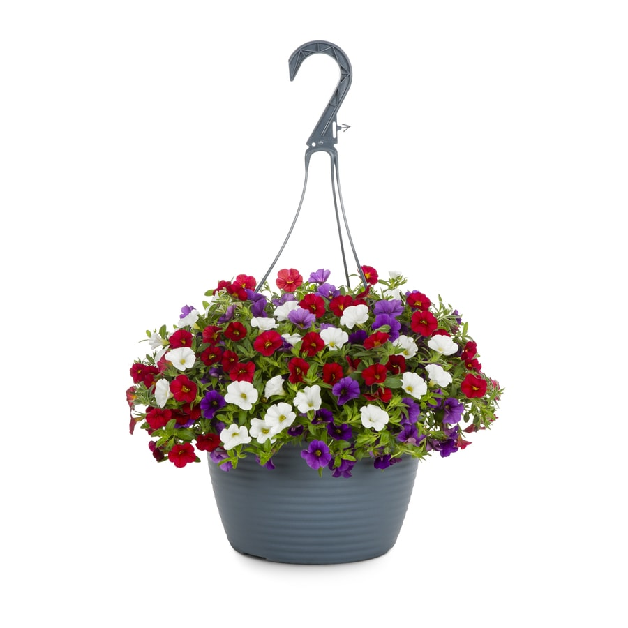 Shop 15 Gallon Hanging Basket Red White And Blue Calibrachoa