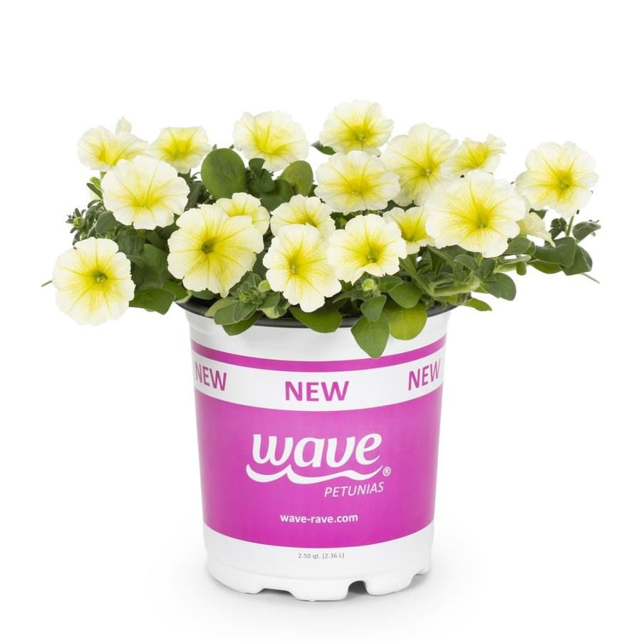 2.5-Quart Wave® Series Petunia (L00983)