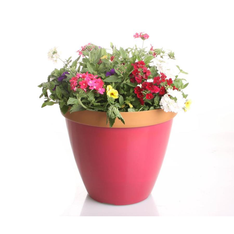 3-Gallon Planter Mixed Annuals Combinations
