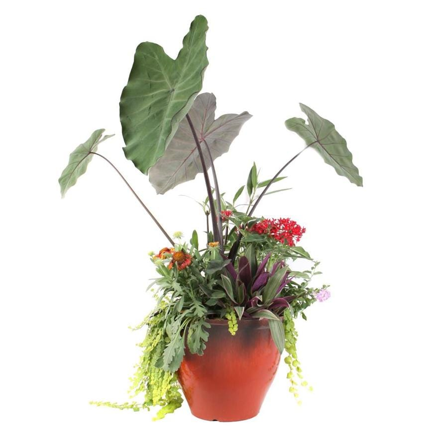 Shop Flowers For Florida 32 Gallon Planter Combo At Lowes