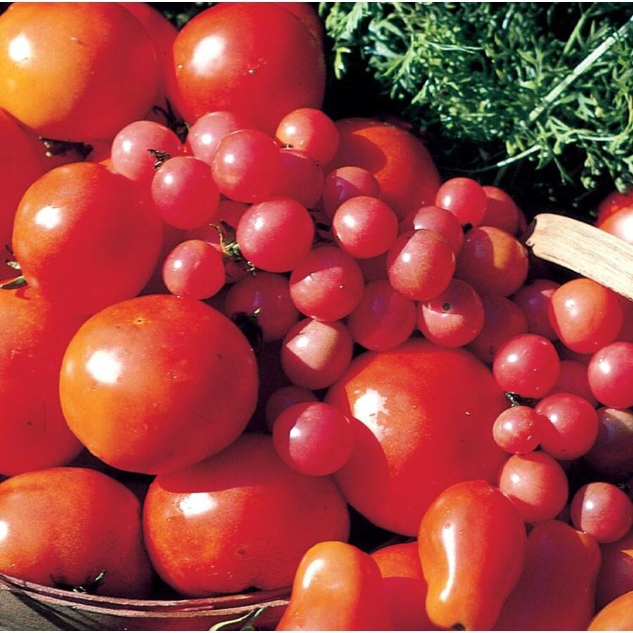3.2-Gallon Tomato Plant (L14917)