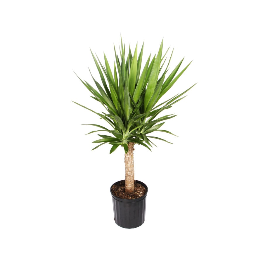 shop house plants at lowes