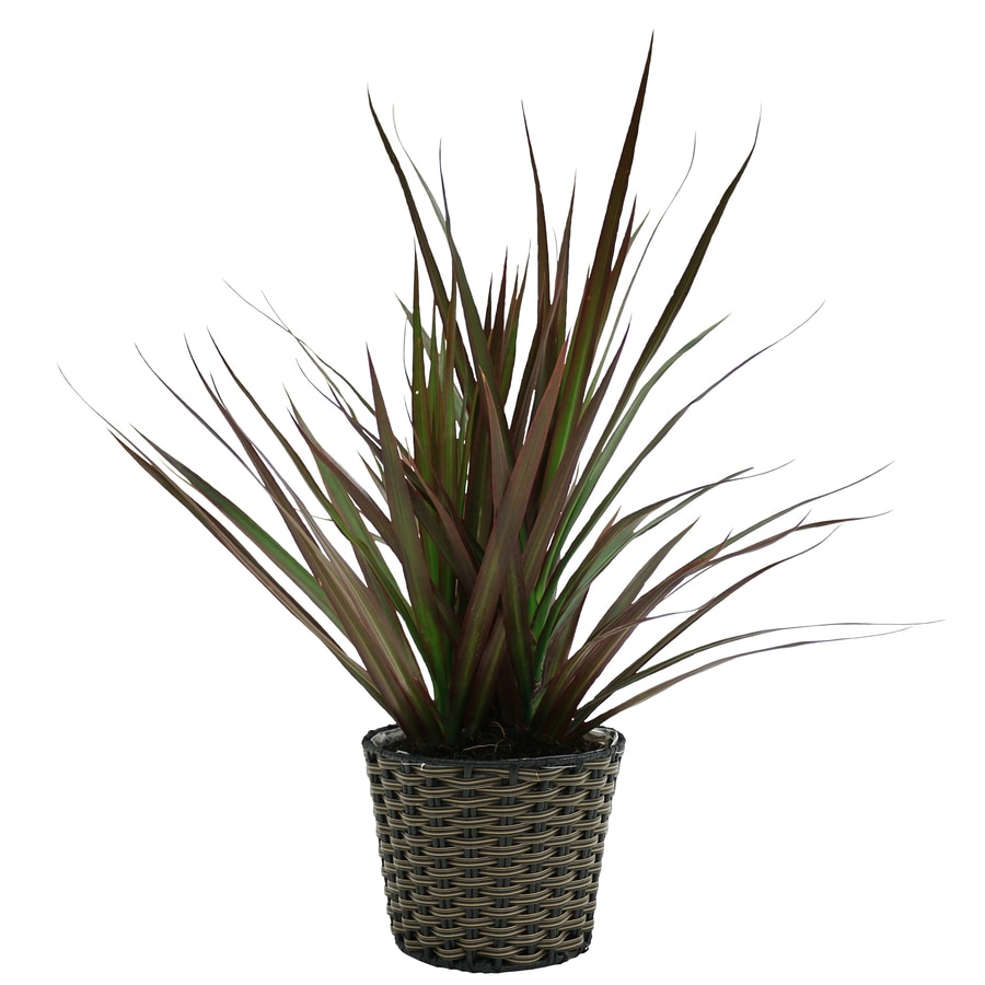 1.4 Quart(S) Madagascar Dragon Tree Planter