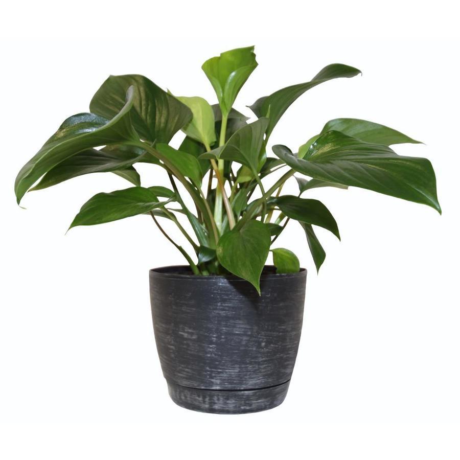 1.34 Quart(S) Emerald Gem Planter