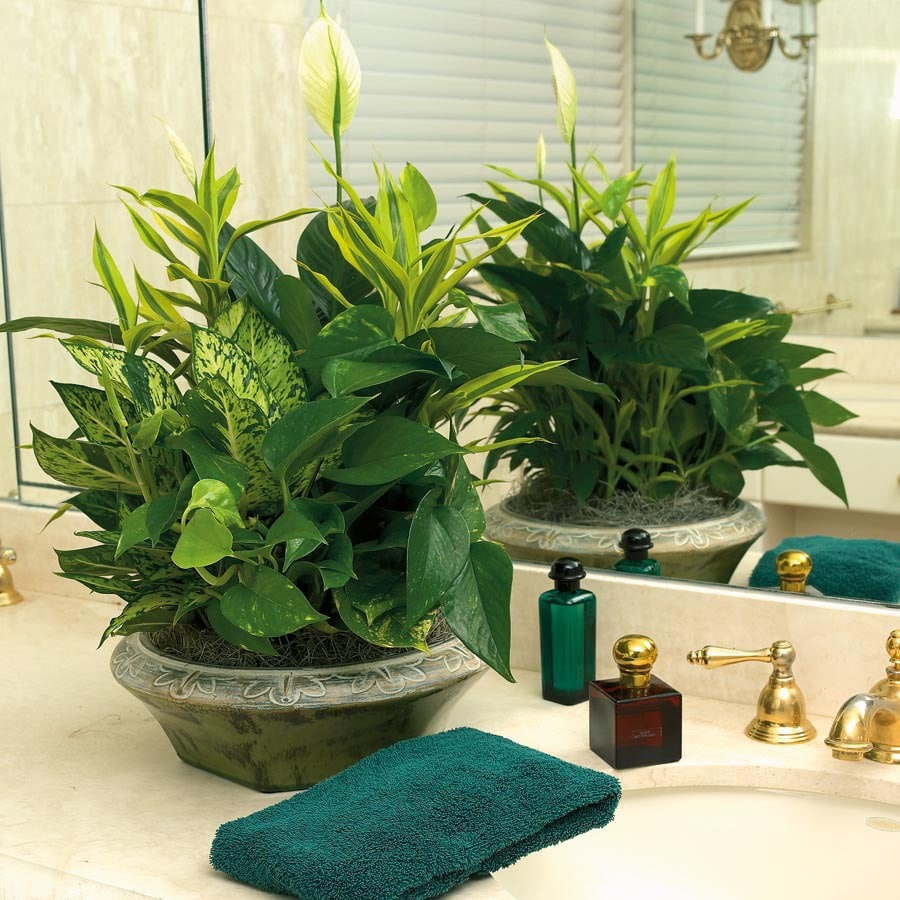 Foliage Dish Gardens (L20945hp)