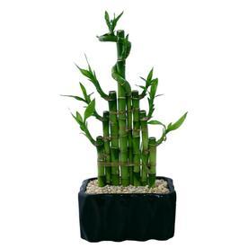 Plants, Bulbs & Seeds at Lowes com