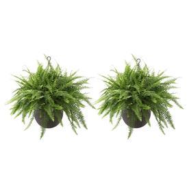 Tropical Plants at Lowes com