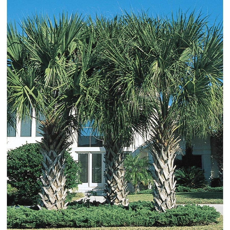 6.5-Gallon Palmetto (L22586)
