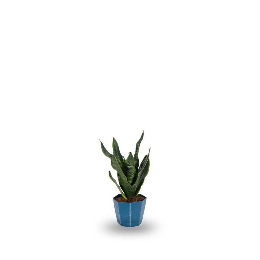 1.9-Quart Sansevieria Pot (L20970Hp)