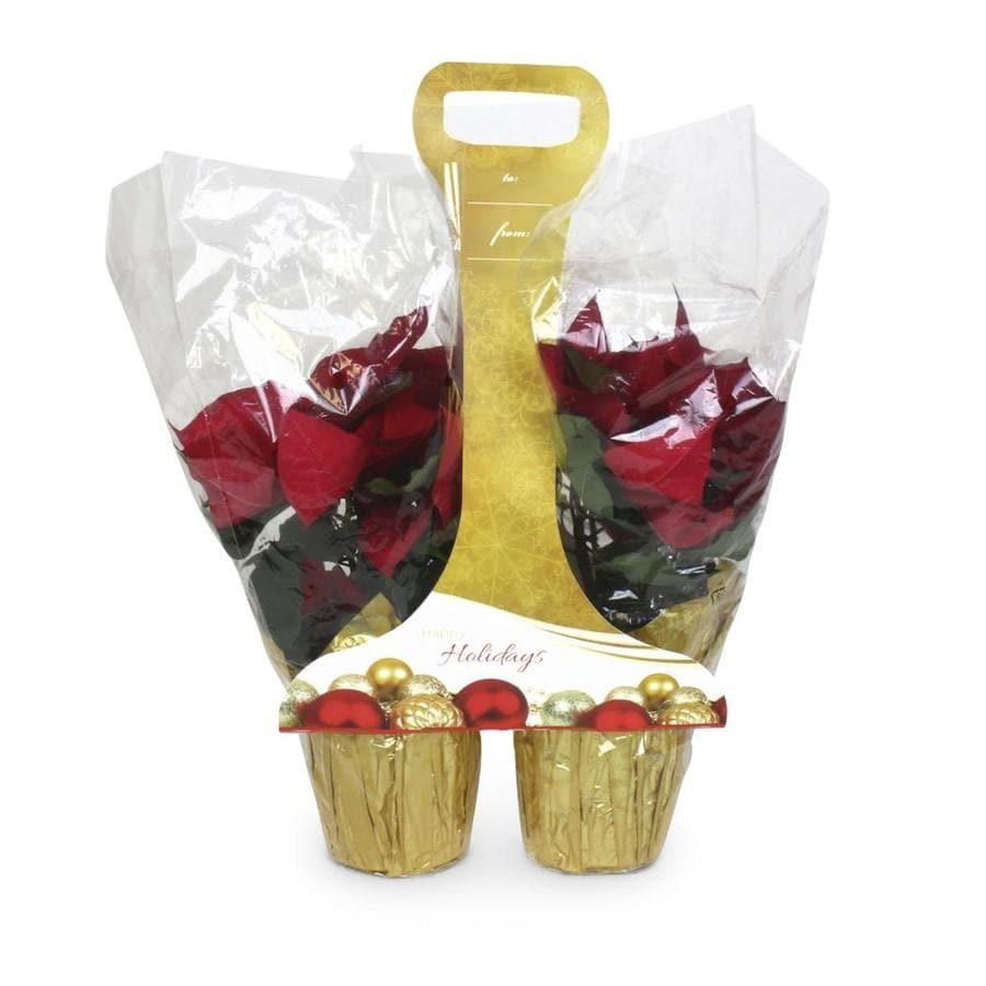 2-Pack Poinsettia (L17756hp)