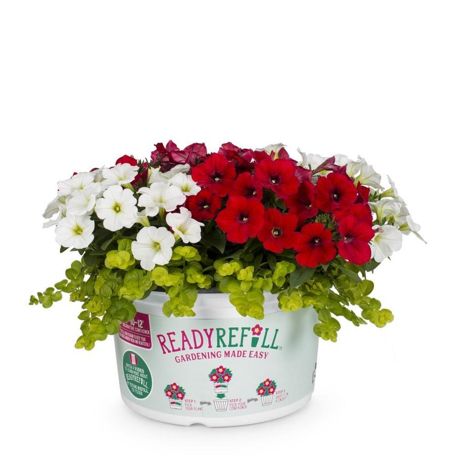 Ready Refill 3-Quart Petunia (L17355)