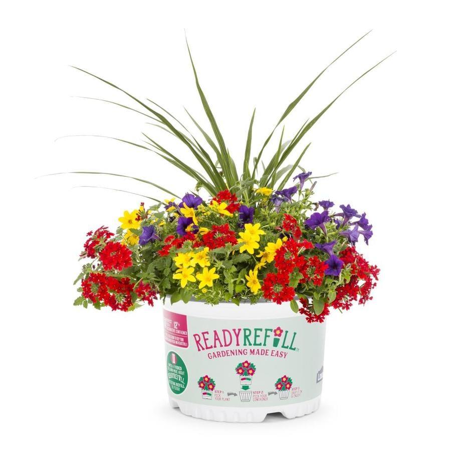 Ready Refill 2.88-Gallon Petunia (L17355)
