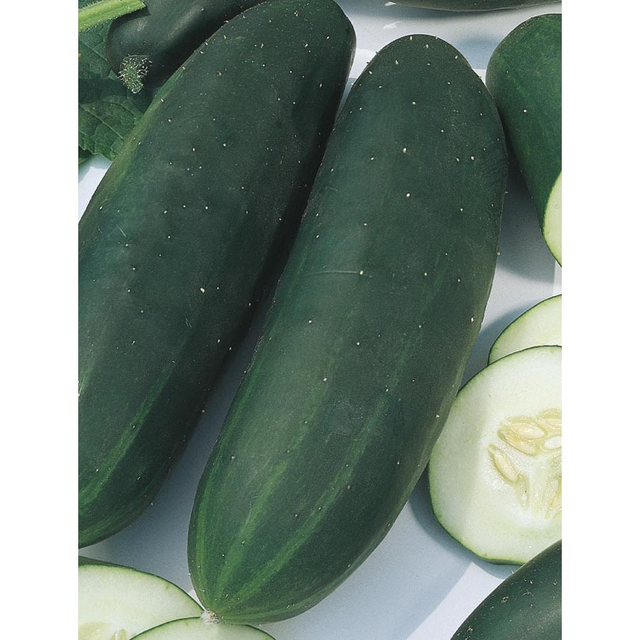 2.5-Gallon Cucumber Plant (L17265)