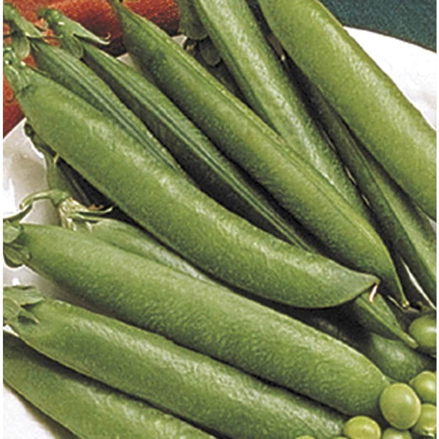 2.5-Gallon Sugar Snap Pea Plant (L20569)