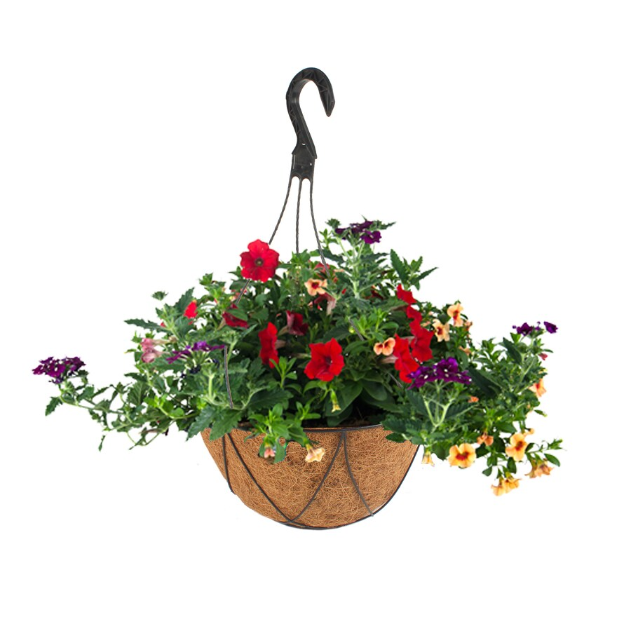 2-Gallon Mixed Annuals Combinations