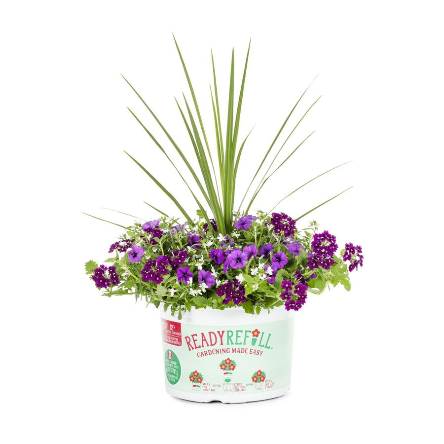 Ready Refill 2.88-Gallon Mixed Annuals Combinations