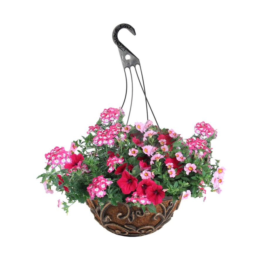 3-Gallon Mixed Annuals Combinations