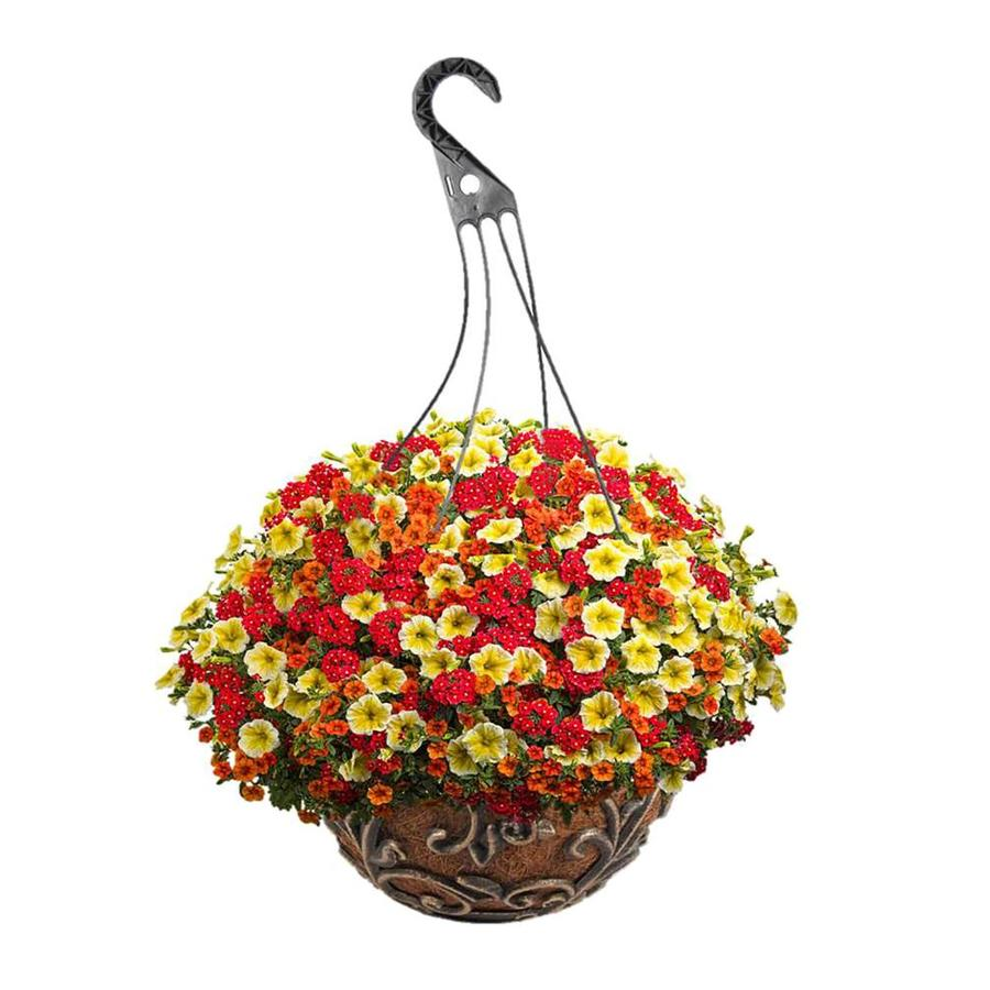 Proven Winners 3-Gallon Mixed Annuals Combinations