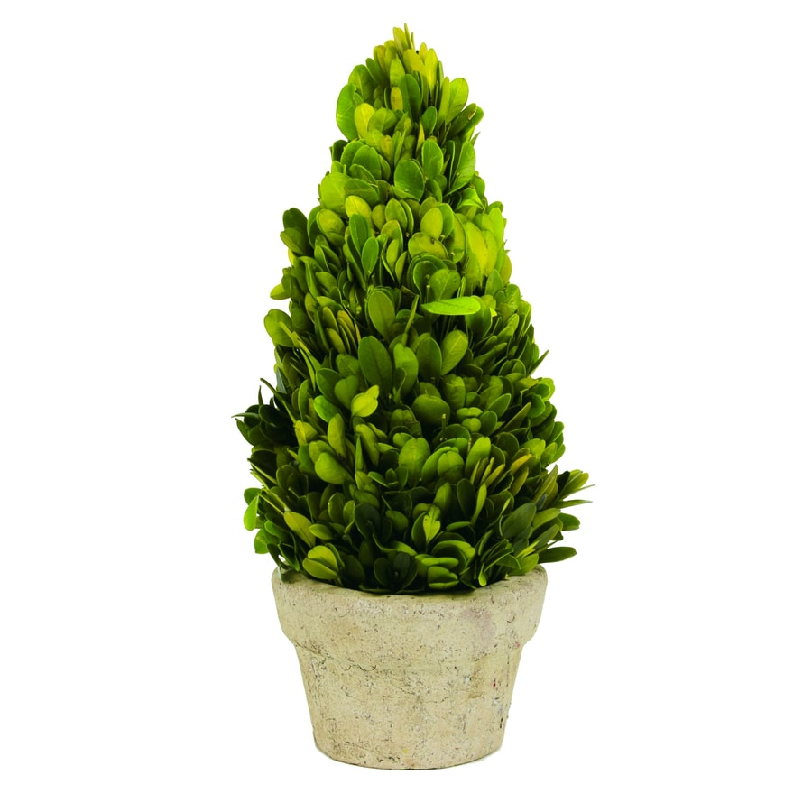 12-in Green Boxwood