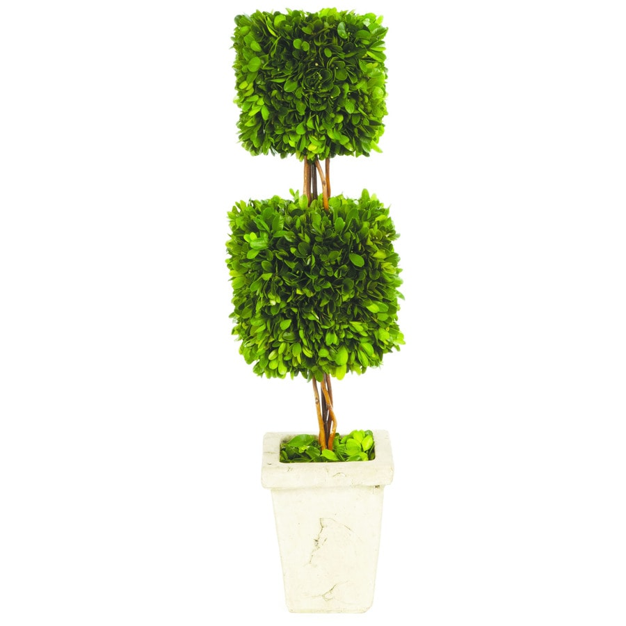 24-in Green Boxwood