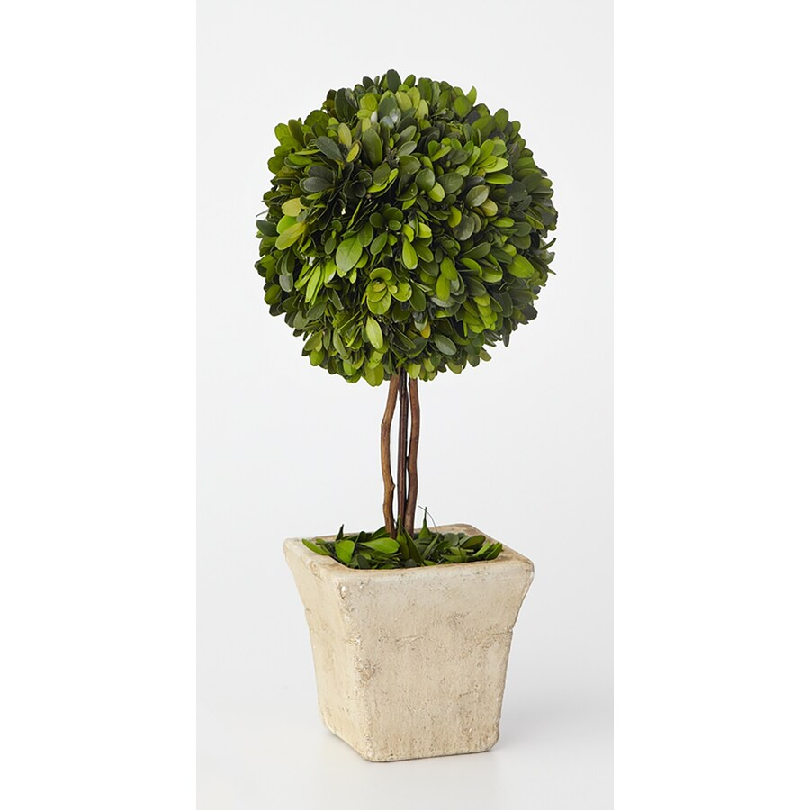 17-in Green Boxwood