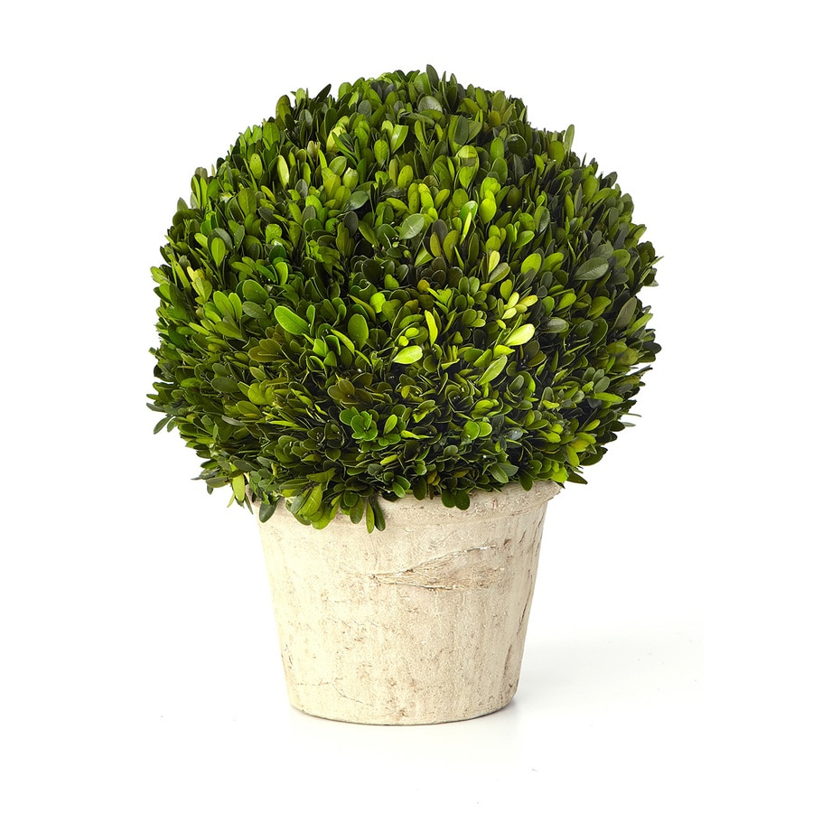 15-in Green Boxwood