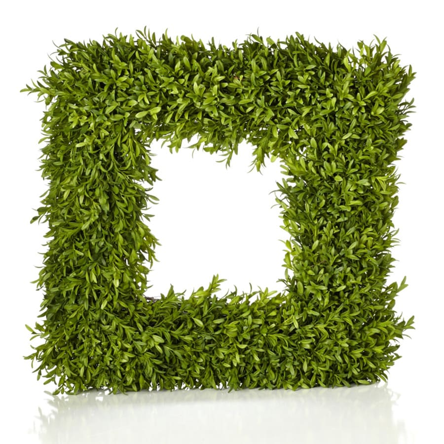 20-in Green Boxwood