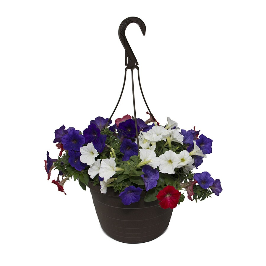 1.5-Gallon Hanging Basket Mixed Annuals Combinations