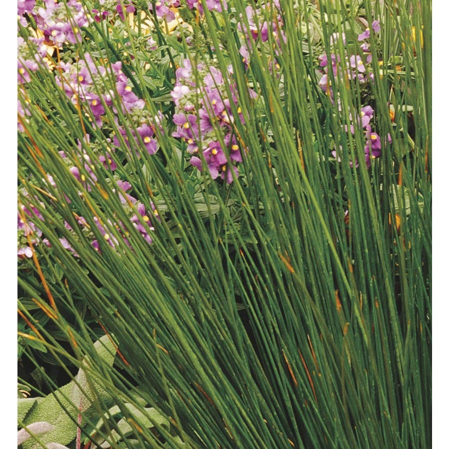 1.5-Gallon Soft Rush (LW03996)