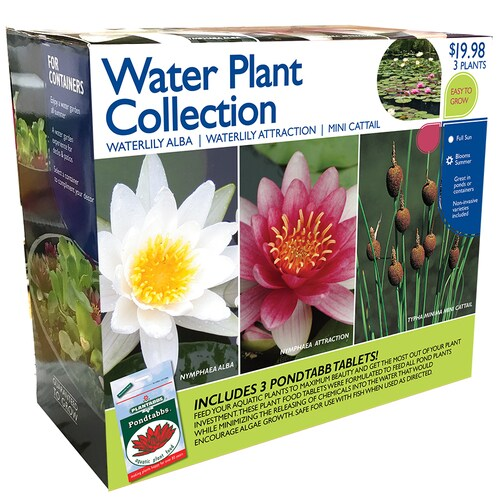 3 Pack Water Lily Bulbs Lb21735 In The Plant Bulbs Department At Lowes Com