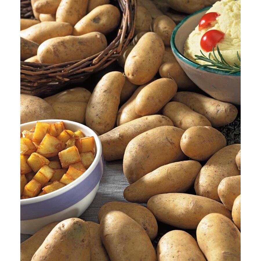 10-Pack Russet Burbank Potato Plant (L20403)