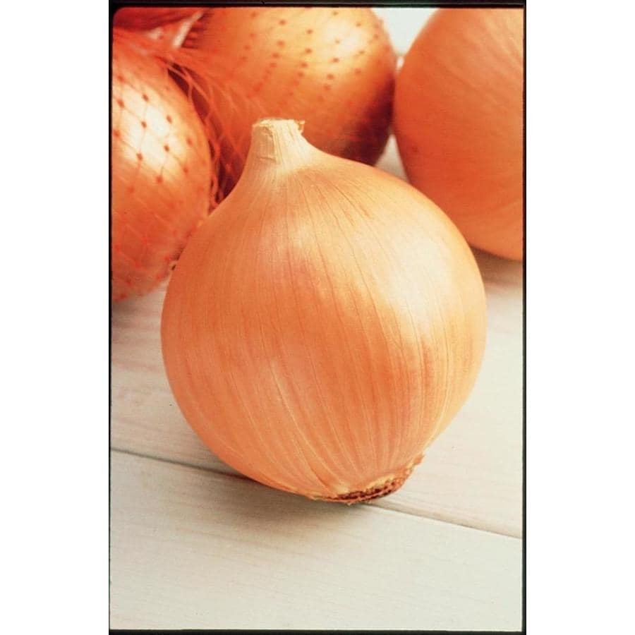 Shop 60-Pack Yellow Onion Plant (LB518) at Lowes.com