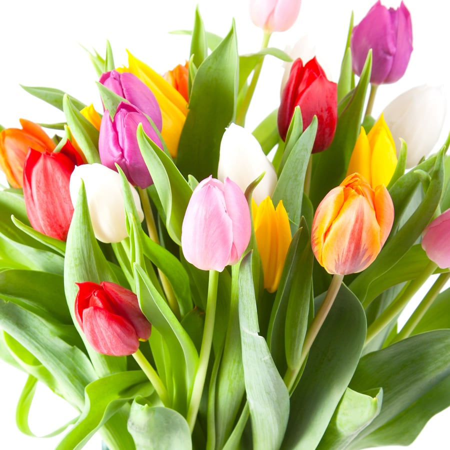 50-Count Tulips Mixed Bulbs