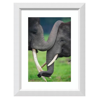 Amanti Art 23 In W X 30 In H Framed Print Asian Elephant Pair