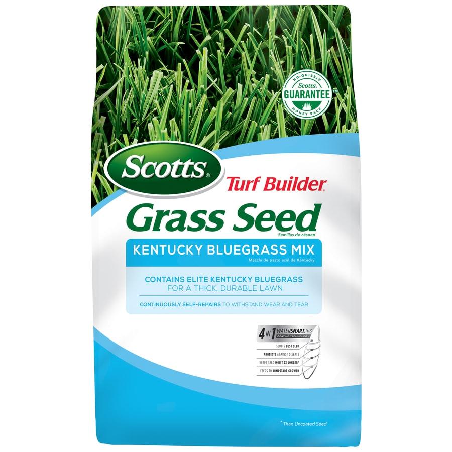 Scotts 3-lb Kentucky Bluegrass Seed