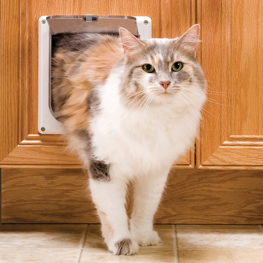 PetSafe Cat Flap Small White Plastic Pet Door (Actual: 5.75-in x 5.75-in)