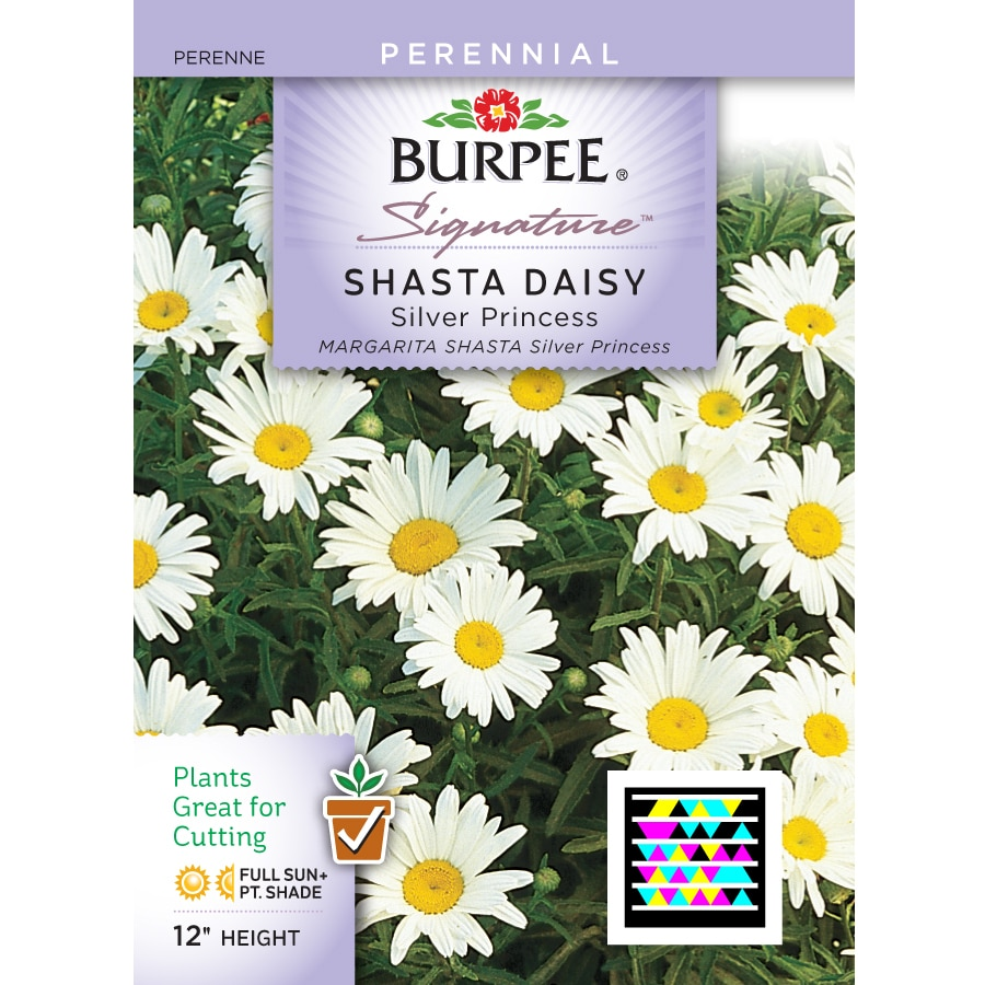 Shop burpee shasta daisy flower seed packet at lowes burpee shasta daisy flower seed packet izmirmasajfo
