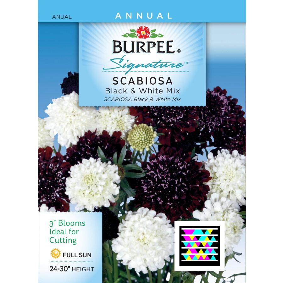 Burpee Scabiosa Flower Seed Packet