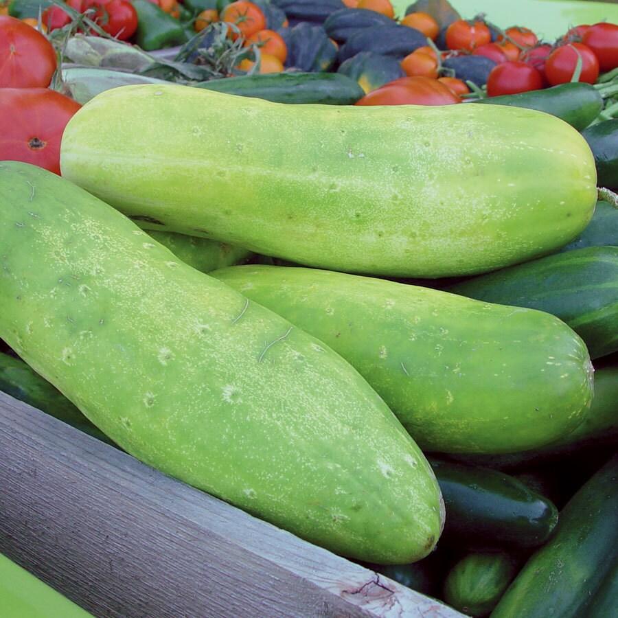 Burpee Yellow Submarine Cucumber Seed Packet