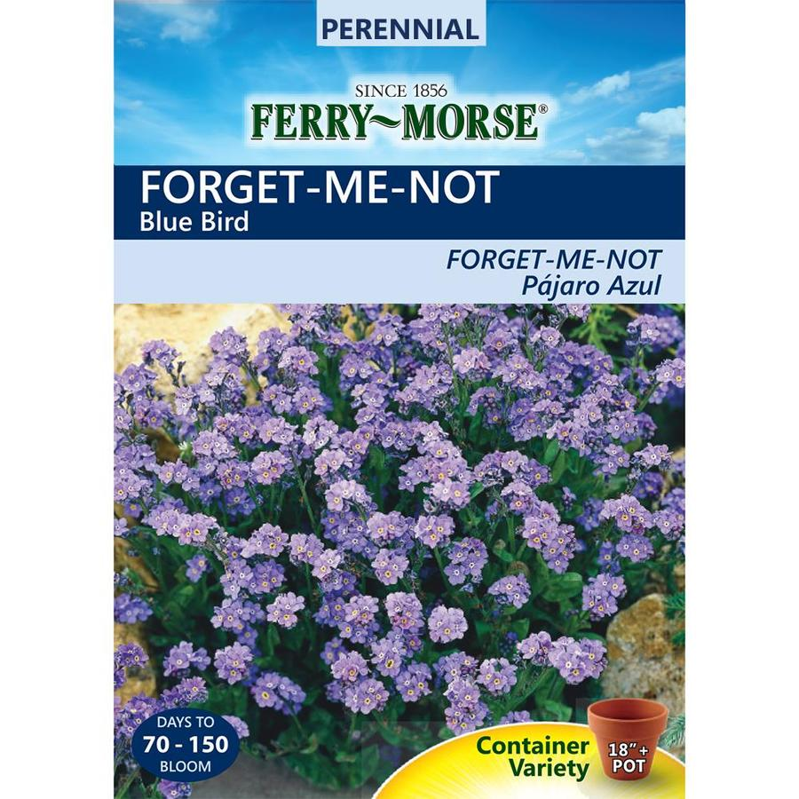 Ferry-Morse 250-Milligrams Forget-Me-Not Seeds (L0000)