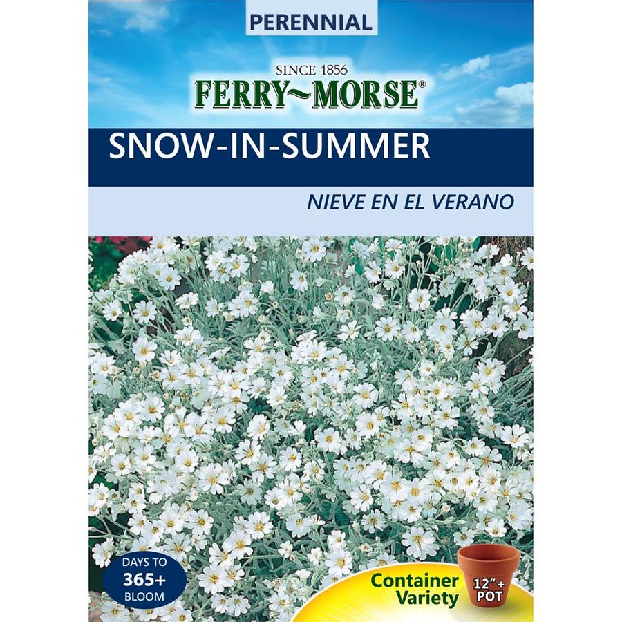 Ferry-Morse 110-Milligrams Snow-In-Summer Seeds (L0000)