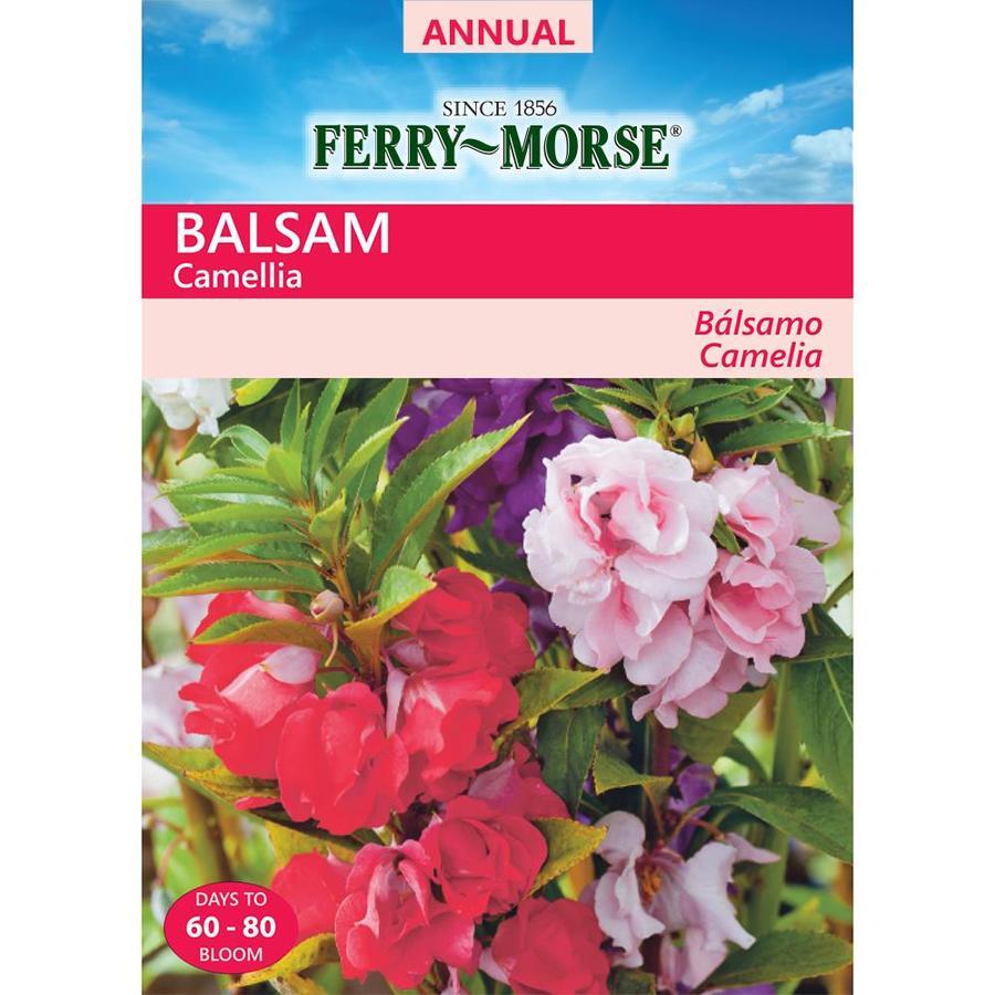 Ferry-Morse 900-Milligrams Balsam Seeds (L0000)