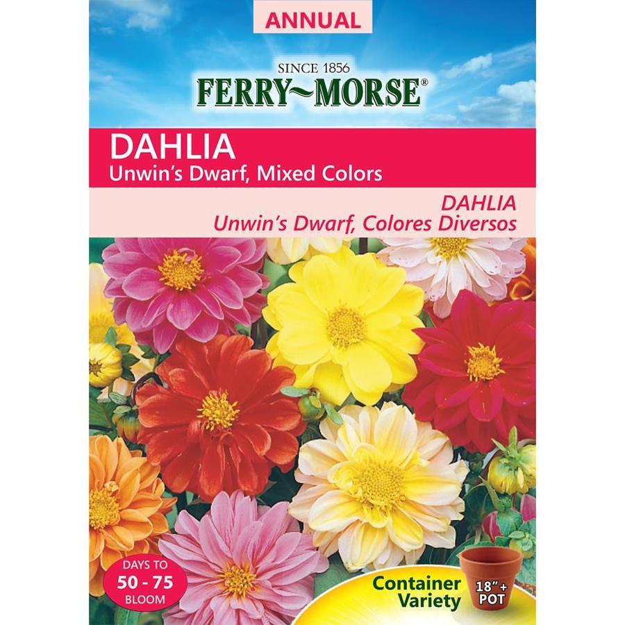 Ferry-Morse 475-Milligrams Dahlia Seeds (L0000)